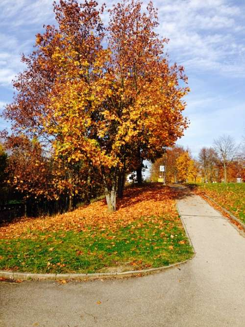 Cycle Path Walk Autumn Colorful Leaves Colorful