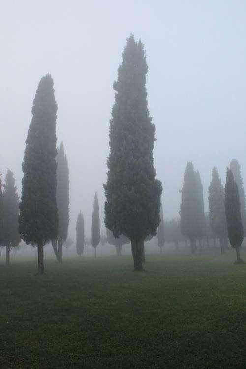 Cypress Background Fog