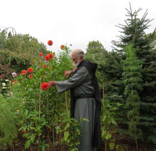 Dahlias Flowers Benedictine Monk Priest