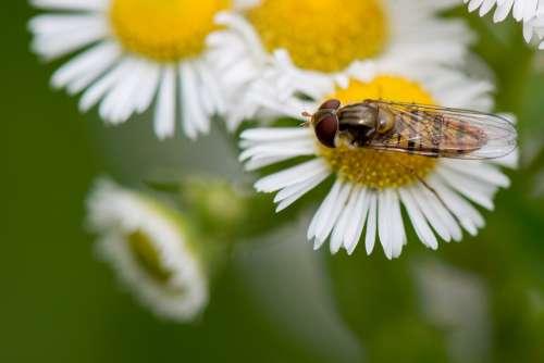 Dandelion Flower Macro Yellow Nature Summer Life