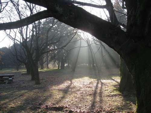 Dawn Trees Nature Mist Sunbeams Shadows