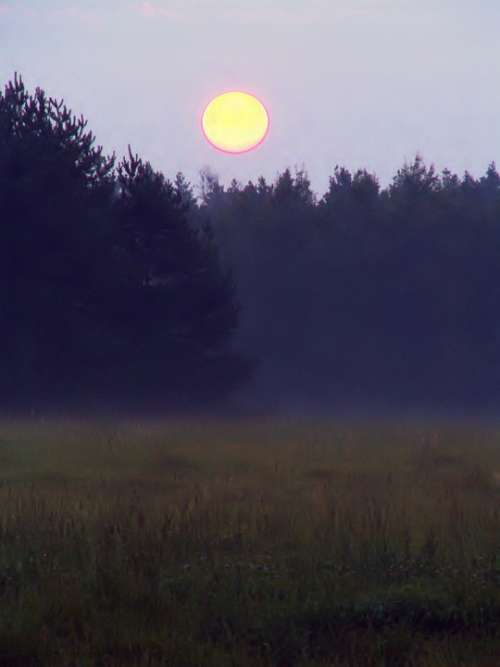 Dawn Glade Forest The Rising Sun Fog Nature