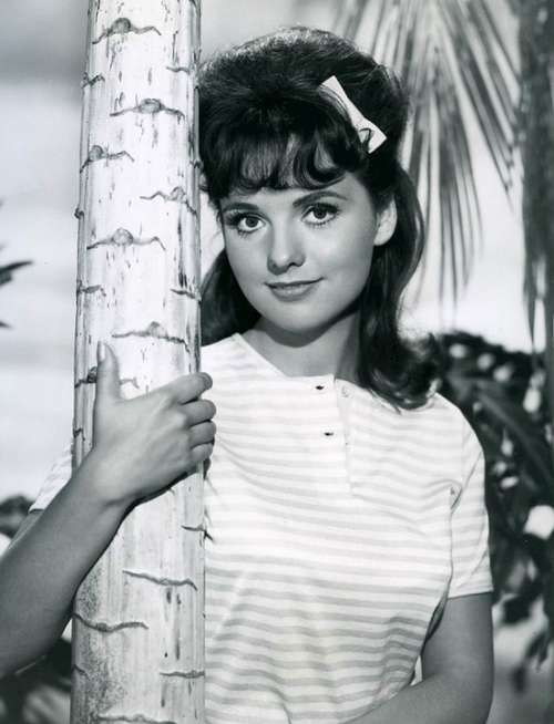 Dawn Wells Actress Television Series
