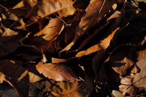 Dead Leaf Plant Park