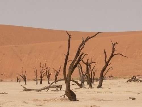 Deadvlei Sahara Dead Vlei Namibia Drought Sand