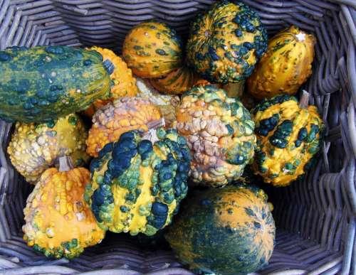 Decorative Squashes Pumpkins Colorful