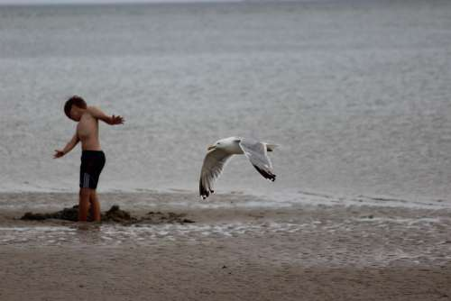 Denmark Blavand Beach North Sea Seagull Child