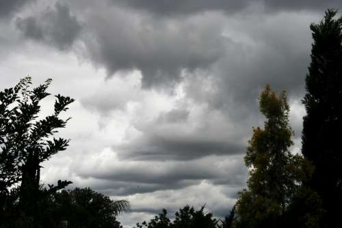 Dense Clouds Day Time Tall Trees Cypress