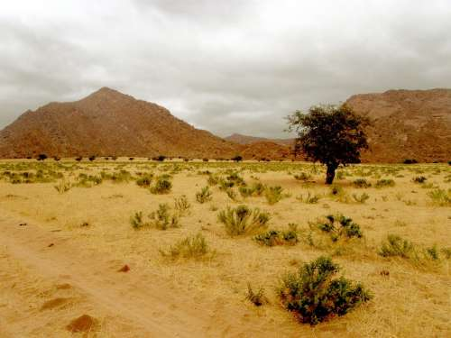 Desert Hill Rocks Tree Lonely Barren Bare