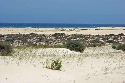 Desert Sand Hot Dry Dunes Sun Sea Water Beach