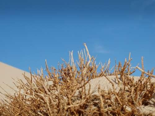 Desert Sand Sky Dry Hot Scrub Africa