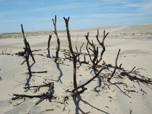 Desert Twigs Sand Sky Branch Old Tree
