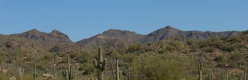 Desert Cactus Nature Landscape Dry Saguaro