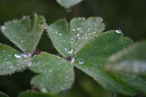 Dewdrop Leaf Plant Dew Close Up Morgentau