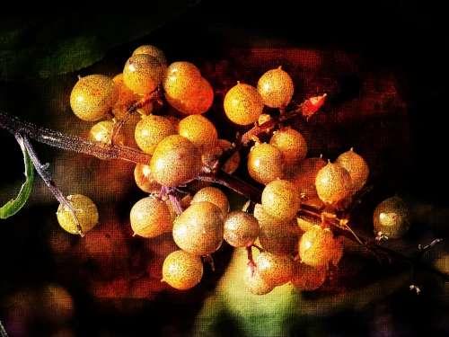 Digital Art Graphic Painting Style Berries Nature
