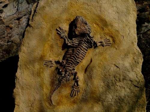 Dinosaur Petrified Lizard Stone