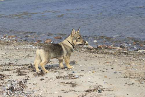 Dog Beach Westgoetaspitz Sea