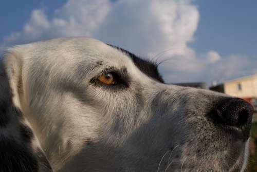 Dog Animal Friend The Jump Agile Pet