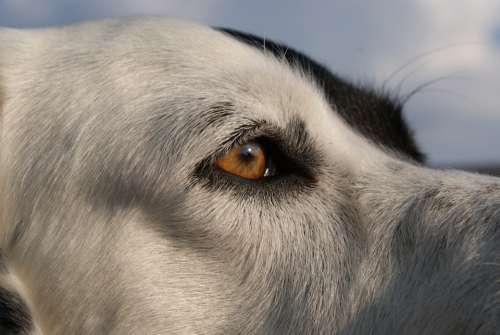 Dog Animal Friend Pet View Eyes Animals Pictures