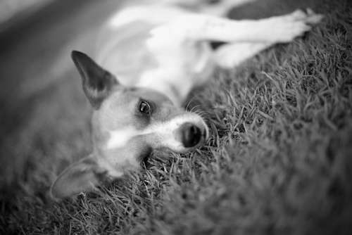 Dog Pet Mammal Puppy Cute Face Pets