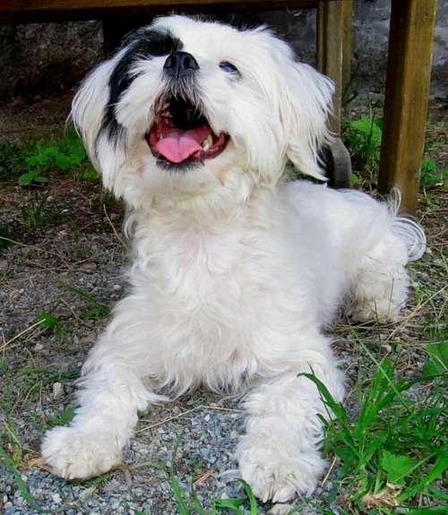 Dog Animals Animal Dogs Fur White
