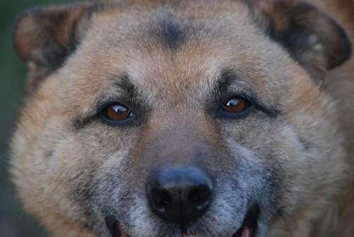 Dog Fur Animal Head Friend Brown