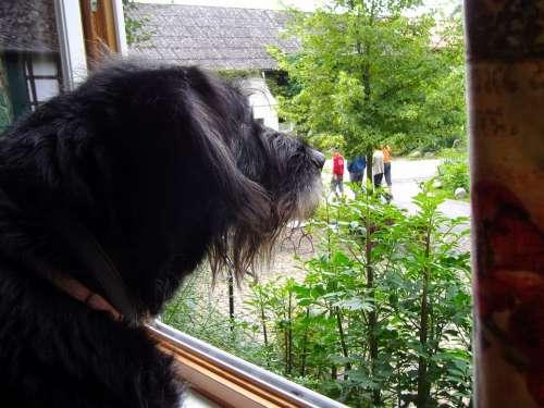 Dog Window Views Outlook