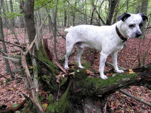 Dog Forest White Black Guard Dog Watch Attention