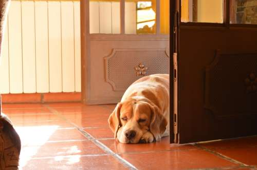 Dog Beagle Contaluz Door Light Network