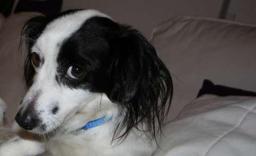 Dog Animal Fur Pet Head Moonlight Friend