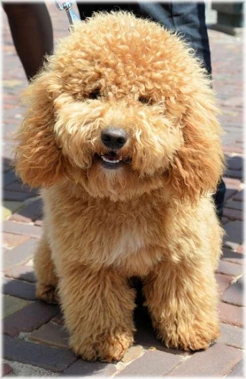 Dog Dogs Pet Holland Model Outdoor Posing