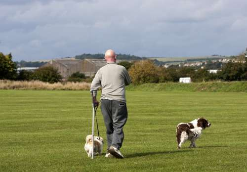 Dog Dogs Walker Man Person Dog Walker Spaniel