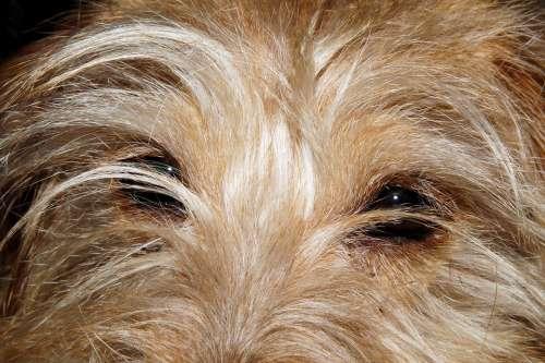 Dog Dog Eyes Close Up Small Dog Portrait