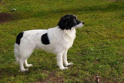 Dog Pet Male Garden Fur Pride Vigilant Noble