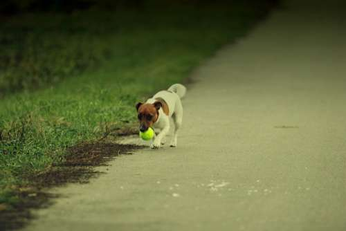 Dog Animal Puppy Animals Pets Pet Each