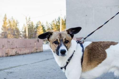 Dog Pet Dog On A Leash Nature City Leash