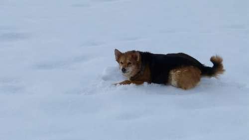 Dog Snow Fun Winter Nature