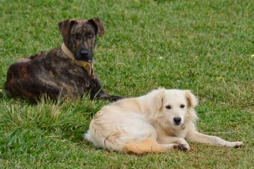 Dog Animals Domestic Animals Pet