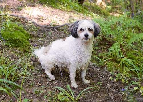 Dog Pet Animal Forest