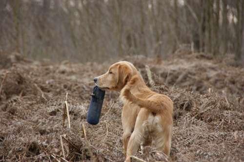 Dog Retrieve Train Pet Play Dummy Brown Green