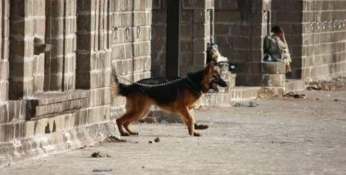 Dog Leashed Dog Leash Place Alone Pet