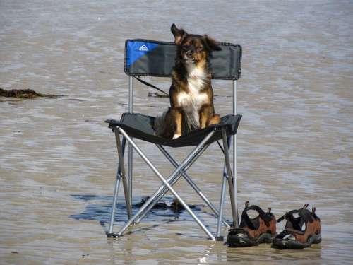 Dog Sea Beach Vacations Rest Wait Chair Sit