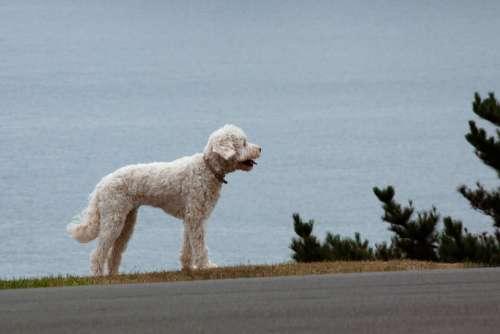 Dog Animal Road Pet Go Walkies