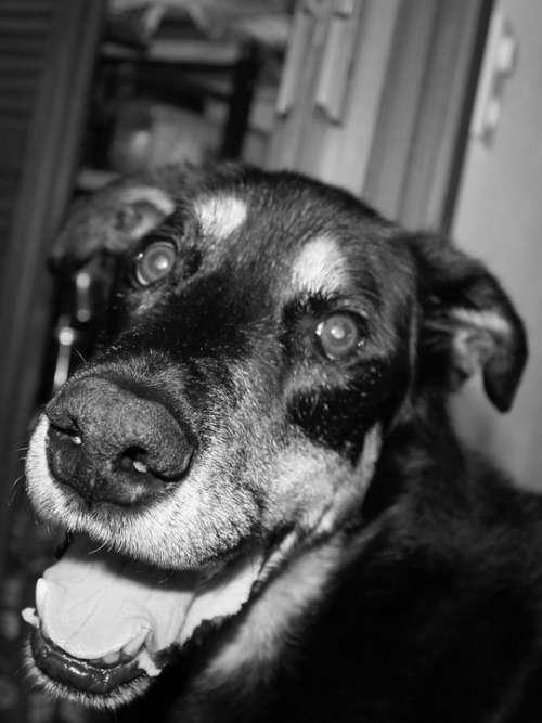 Dog Snout Animal Pet