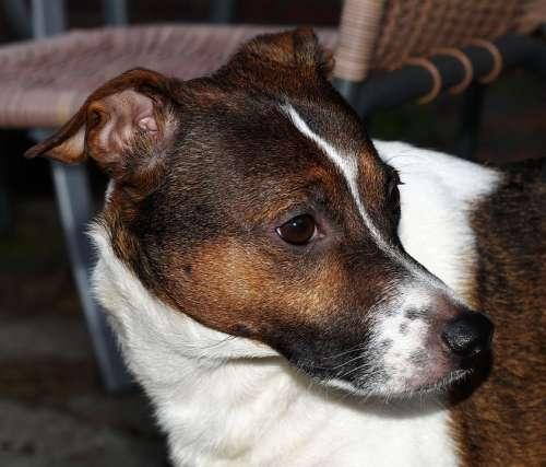 Dog Portrait Head Face Pet Hybrid Eyes Snout