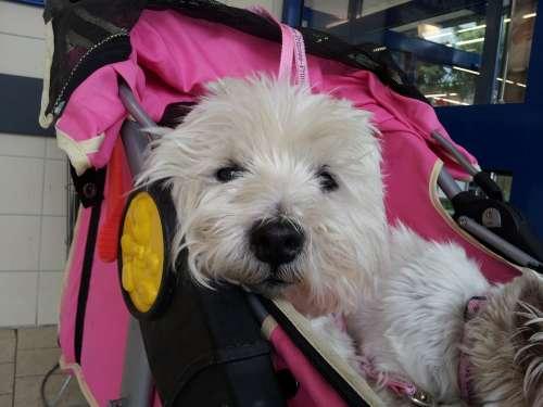Dog Animal Pet Baby Carriage Sleep Tired