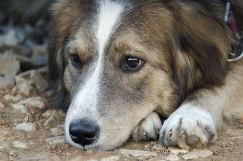 Dog Animals Man'S Best Friend Pets View Animal