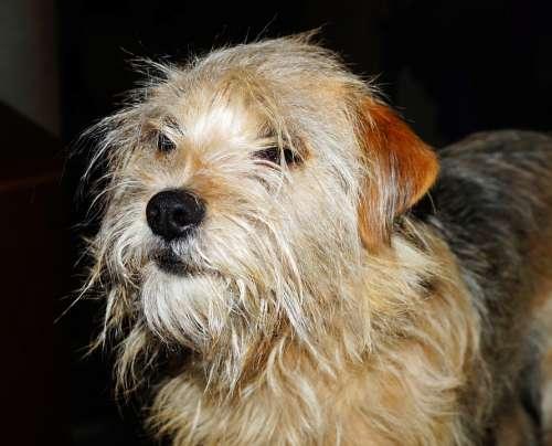 Dog Bitch Portrait Face Animal Brown Eyes Snout