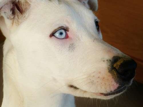 Dog Pet Snout Eyes Nose