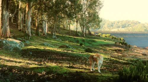 Dog Nature Landscape Green Animal